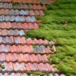 Progression de la mousse sur toiture